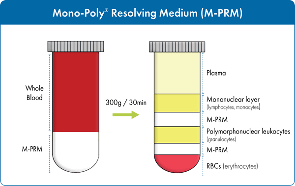 Figure 2. Isolation of both mononuclear and polynuclear cells from whole blood using M-PRM